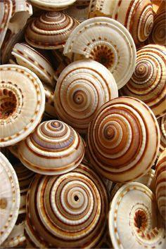 Beautiful spiral seashells