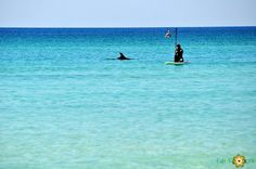 paddle boarding with the dolphins...Destin, Florida