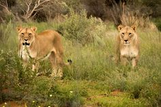 Namibia Day Tours offers a wide range of enjoyable activities. So discover popular activities from day tours to multi day trips with Enrico's Tours & Safaris today! Day Tours, Attraction, Safari, Tourism, Trips, Range, Popular, Activities, Animals