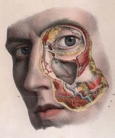 """djinn-gallery: Horrifyingly detailed images of. - djinn-gallery: """"Horrifyingly detailed images of surgical procedures from the early """" Head Anatomy, Anatomy Art, Anatomy Drawing, Medical Drawings, Medical Art, Science Illustration, Medical Illustration, Illustration Botanique, Medical Anatomy"""