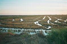 Los arrozales de Sevilla son un lugar espectacular. Un horizonte lejano y repleto de agua en las marismas del Guadalquivir. Aquí se desarrolla una escena importante de la novela de #JosédelaRosa, #TodaslasEstrellassonparaTi