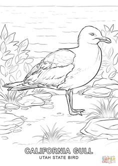 Perched Northern Mockingbird Coloring Page