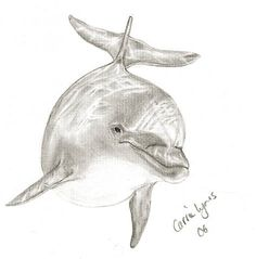 Another Dolphin Drawing by carriephlyons on DeviantArt Dolphin Drawing, Ocean Drawing, Dolphin Art, Dolphin Painting, Animal Sketches, Animal Drawings, Drawing Sketches, Pencil Drawings, Sketching