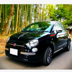 fiat500  by gucci