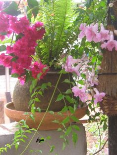 Container Garden Flower Containers, Container Plants, Container Gardening, Tiny Flowers, My Flower, Flower Gardening, Gardening Tips, Garden Pots, Garden Ideas