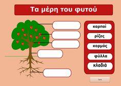 Τα μέρη του φυτού: Οι παίκτες ονομάζουν τα μέρη του φυτού. Παράλληλα λαμβάνουν πληροφορίες για τα διάφορα μέρη του φυτού.