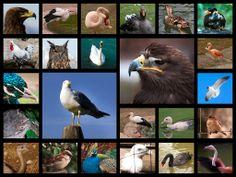 Vögel Mosaik
