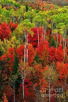 Autumn along the Snake River, Caribou-Targhee National Forest near Palisades, eastern Idaho | Greg Norrell, Fine Art America