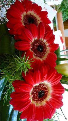 August Flower Tattoo, August Birth Flower, Gladiolus Flower Tattoos, Gerbera Flower, Gerbera Daisies, Most Beautiful Flowers, Exotic Flowers, Pretty Flowers, Gladiolus Wedding Bouquet