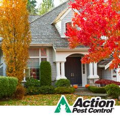 Common fall pests and how to control them!   http://www.actionpest.com/blog/post/fall-pests-and-how-to-control-them