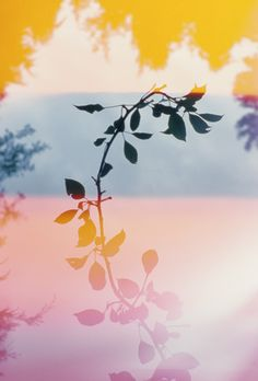 summer colors by Mark Borthwick Panorama Instagram, Surface Design, Mark Borthwick, Multiple Exposure, Lomography, Film Photography, Nature Photography, Pretty Pictures, Color Inspiration