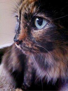 Beautiful Unique Cat Names #visit