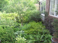 california shade garden | Shade Gardens