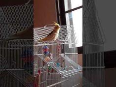 Ο Ρίκο και η πάρλα του Home Appliances, Shopping, House Appliances, Appliances
