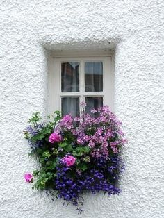 Great White Stucco, squeezed in a window with an abundance of flowers.