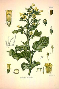 88 free vintage Medicinal Botanical Plants illustrations