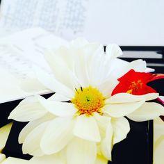 Clases off y la tardecita.... Solecito y Piano time  Una gozada!!!!! ::)) ♪♫♪  www.alejandra-toledano.com
