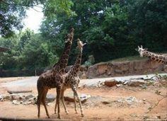 Animals make the funniest photobombers