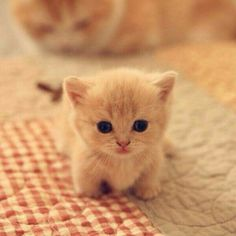 baby kittens, kittens cutest, cats and kittens, baby animals Baby Animals Super Cute, Cute Baby Cats, Cute Funny Animals, Cute Dogs, Funny Cats, Baby Pets, Kittens Cutest Baby, Cats Humor, Dog Humor