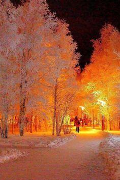 Photography winter nature snow walks 19 New ideas Winter Szenen, Winter Magic, Winter Trees, Winter Park, Winter Light, Beautiful World, Beautiful Places, Simply Beautiful, Beautiful Forest