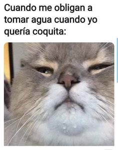 Funny Spanish Memes, Spanish Humor, Funny Memes, Memes Humor, Top Memes, Best Memes, La Mans, Cute Lazy Outfits, Memes Status