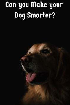 Unlock Your Dog Natural Intelligenceyou will be amazed, how quickly problem behaviors disappear and your dog starts to obey you Online Dog Training, Brain Training, What Kind Of Dog, Things To Think About, Thinking Of You, 10 Years, Make It Yourself, Lettering, Dogs