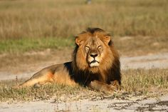 The Big Five: Africa's Most Sought-After Trophy Animals - The New York Times