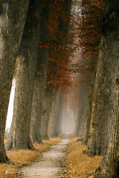 Lane of Likable Tall Reds by larsvandegoor. Please Like http://fb.me/go4photos and Follow @go4fotos Thank You. :-)