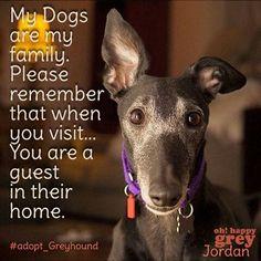 Very well said. Greyhound Art, Italian Greyhound, Greyhound Rescue, Magyar Agar, Animals And Pets, Cute Animals, Dog Poster, Lurcher, Grey Hound Dog