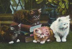 窓辺の本と小さな子猫達/ネコ/写真/アンティークポストカード - ヤフオク!