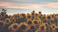 Summer tumblr - Pesquisa Google