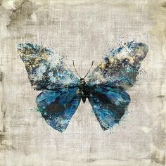 Polymorphism Butterfly