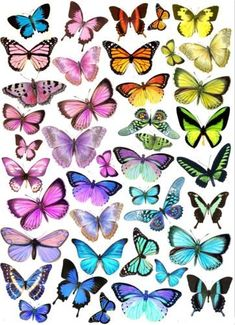 Wafer paper (rice paper) : teoria , tutorials e templates L Wallpaper, Disney Phone Wallpaper, Wallpaper Backgrounds, Butterfly Painting, Blue Butterfly, Colorful Butterfly Drawing, Purple Butterfly Wallpaper, Simple Butterfly, Butterfly Images