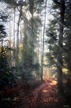 watcher-of-the-skies:  Viktor Korostynski - Forest