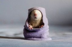 Tiny mouse in a hoodie?