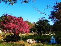 Toda beleza do Jardim Japonês em Buenos Aires.