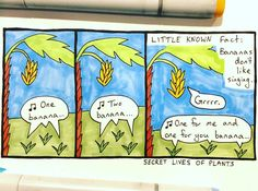 Day #22: Little known #banana fact in today's #SecretLivesOfPlants #comic #Fruit