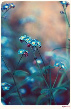 Vintage garden - 3
