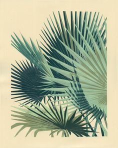 "PALM PLANT 2- 5-color, hand-pulled screenprint- 16"" x 20""- Edition size of 55…"