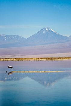 Volcan Licancabur desde la Laguna Chaxa, San Pedro de Atacama (Chile).