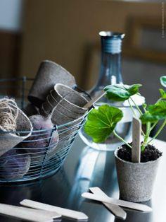 SANFRID bordsskiva i rostfritt stål är tålig och passar bra för gröna fingrars pyssel! HÄMTA karaff, FRÖER odlingsset.