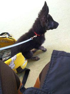 Pippo, 2 mesi