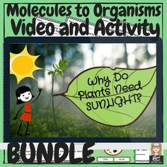 The perfect addition to any plant related science unit! Take your students on a journey from the cellular level to the systems level while teaching them about photosynthesis and plant cell structure (and how it differs from animal cell structure). Science Videos, Science Lessons, Teaching Science, Science Activities, Life Science, Teaching Resources, Stem Teaching, Science Experiments, Teaching Ideas