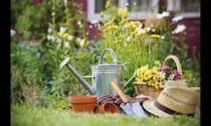 Celebrate Gardening Season With New Trends, Tips and Tools