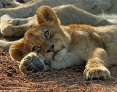 Resting in the sun.