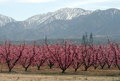 California Travel Blog - California   Vacation Ideas   Places to See   Things to Do   Cities   Beaches   Deserts   Wildflowers