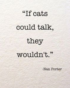 If cats could talk...