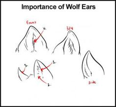 how to draw wolves step 6