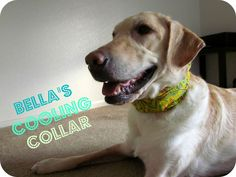 Let's Make: A Dog Cooling Collar! (marriedminzilla.blogspot.com)