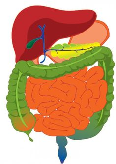 Digestive transit time, the speed that food moves through your digestive tract, is a little bit like Goldilocks - if it's not 'just right' it causes a whole host of digestive woes, including bloating.
